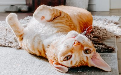 Advises to keep your cat's body heat low during summer