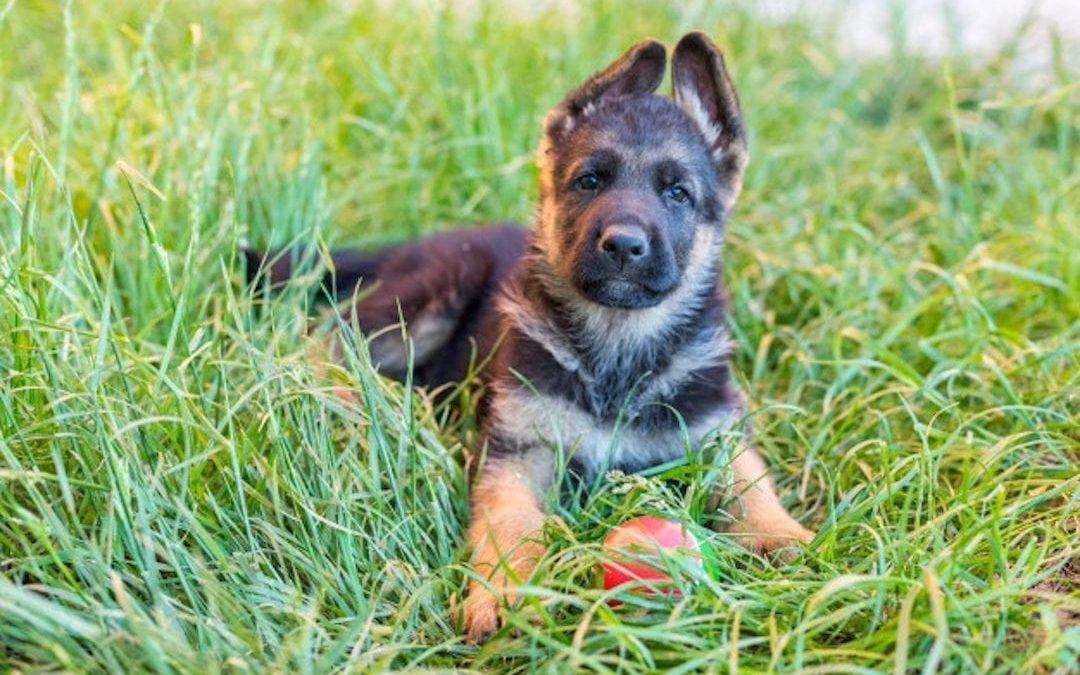 New dog at home? Take these 10 advices